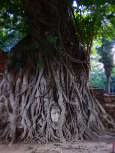 Buddha Kopf Baum