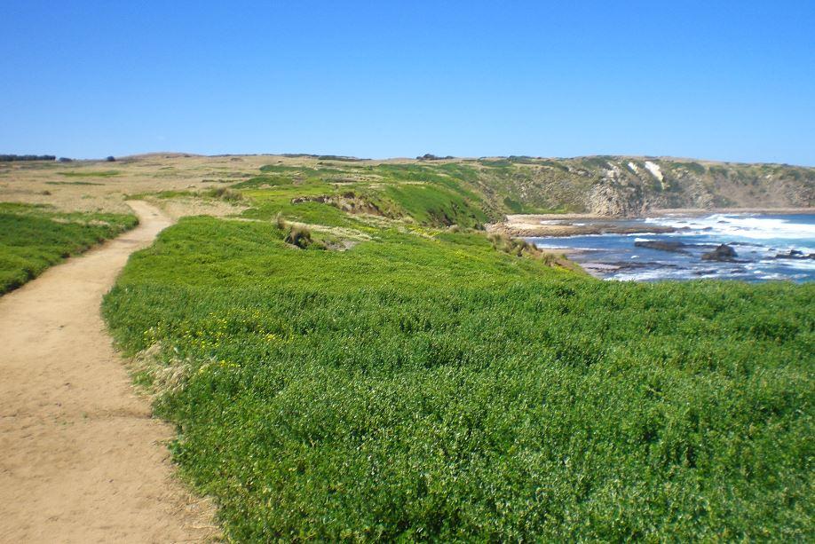 Cape Woolamai Walk