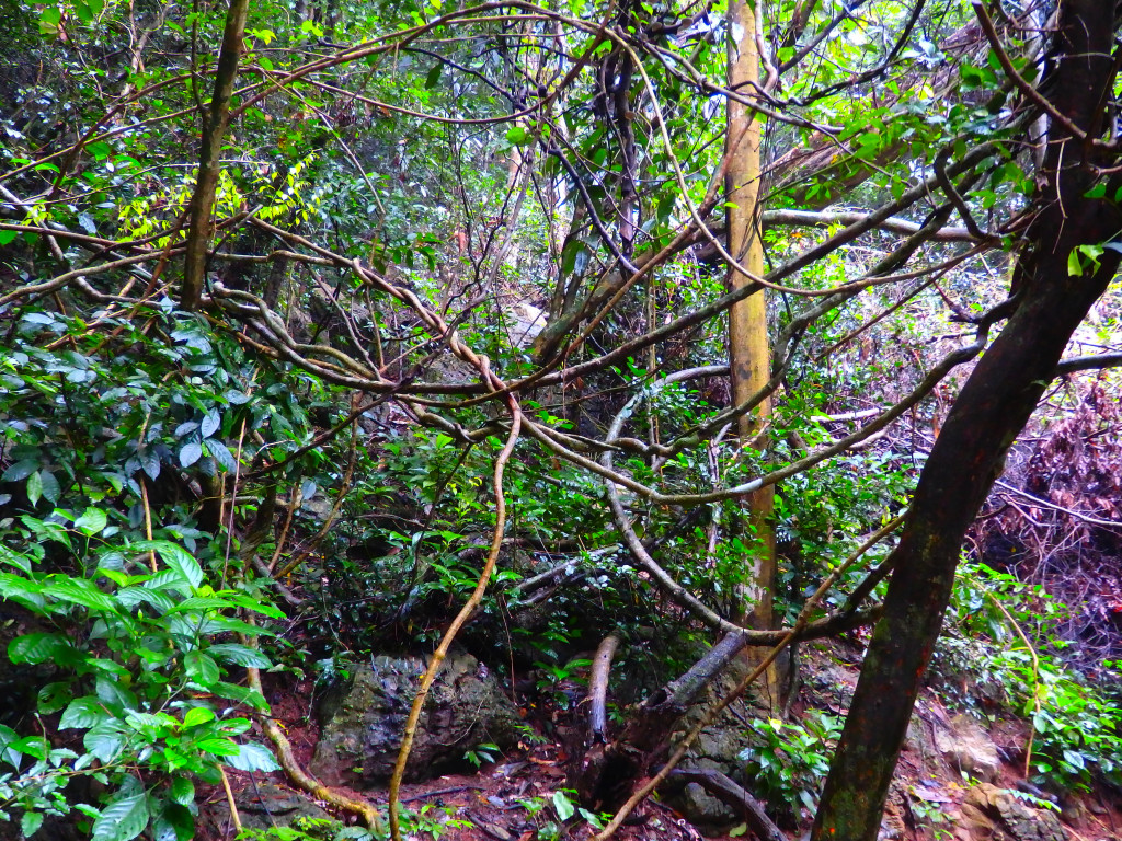 Dschungel Phong Nha Ke Bang Nationalpark