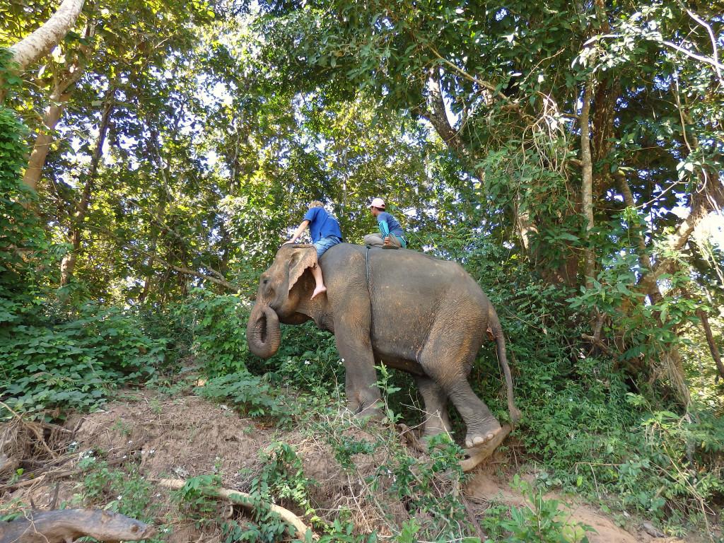 Dschungel Elefanten Reiten