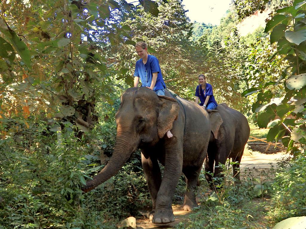 Dschungel Reiten Elefanten zwei