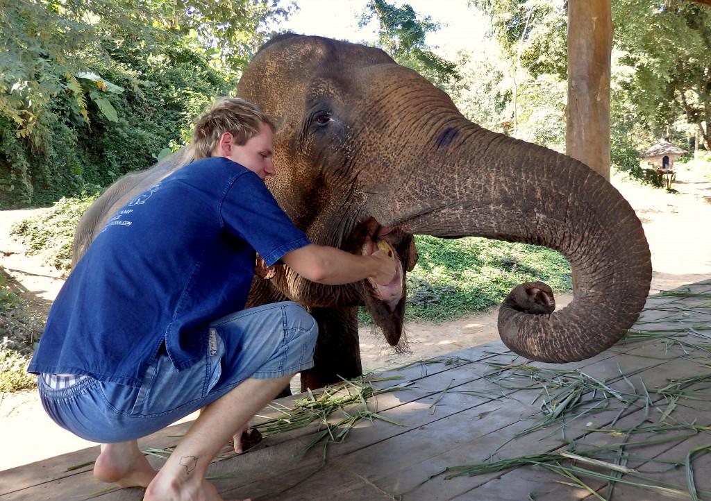 Elefanten füttern mahout training