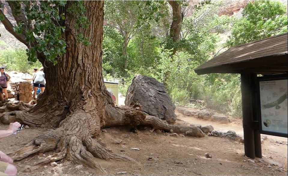 Indian Garden, Bright Angel Trail