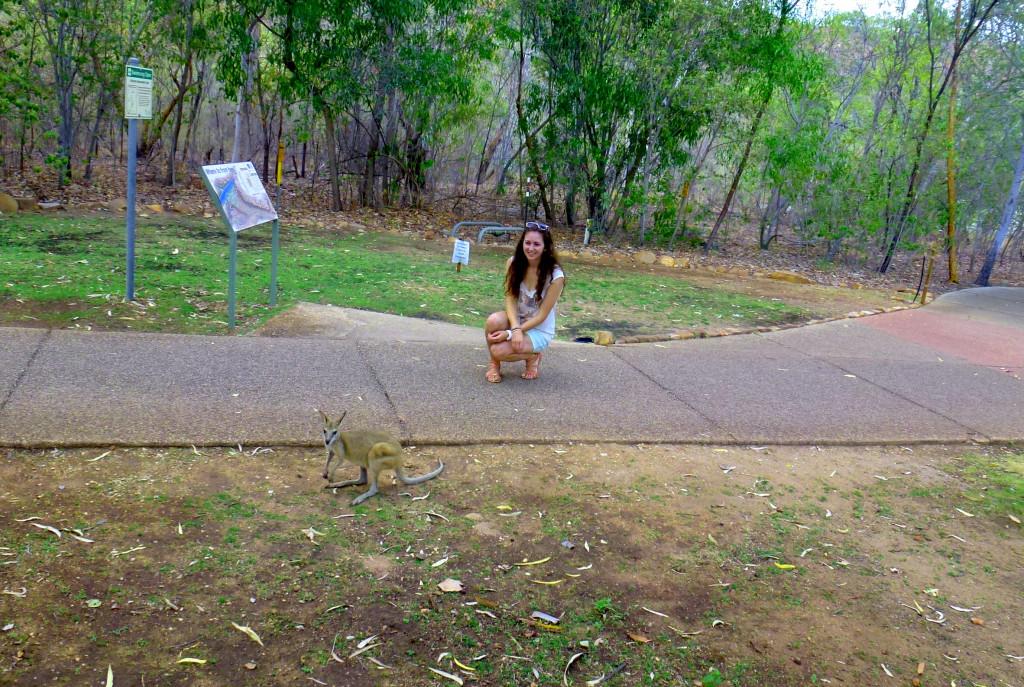 Känguru Katherine