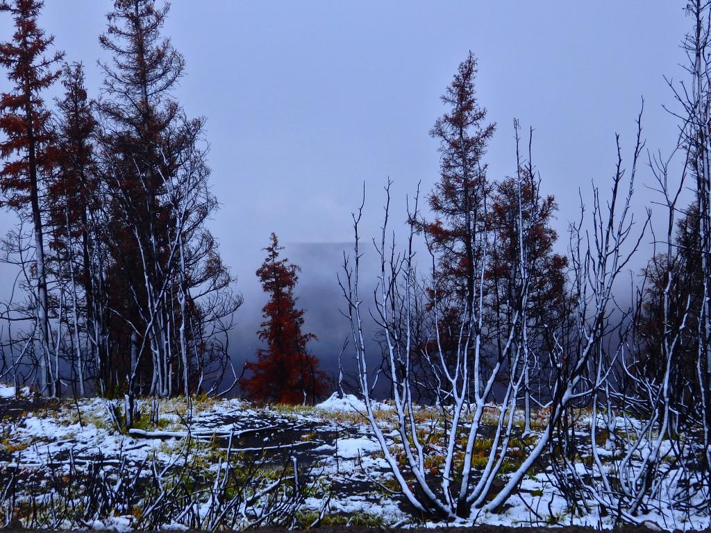 Landschaft Dempster Highway Vegetation