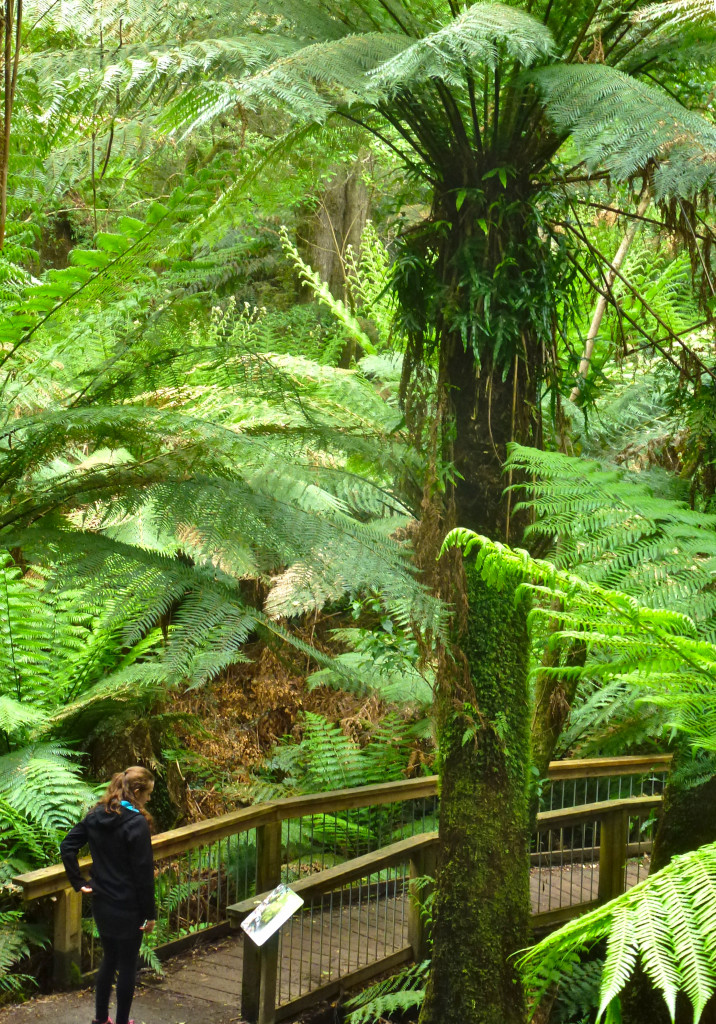Rainforest Boardwalk Apollo Bay