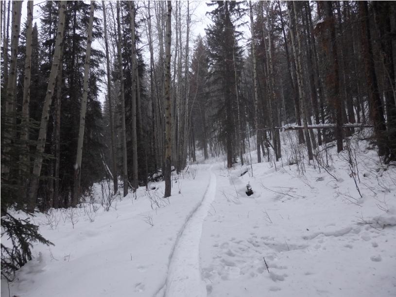 trail snowshoeing Jasper winter