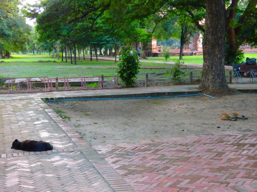 Straßenhunde Ayutthaya