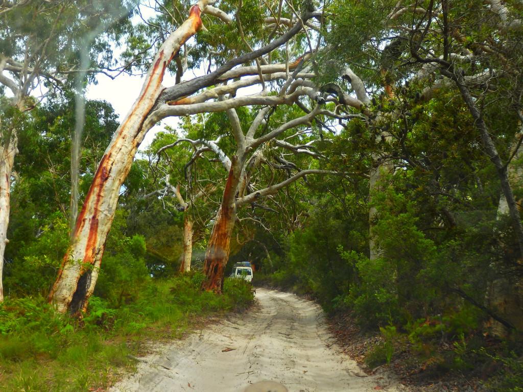 Fraser Island Straßen roads sand