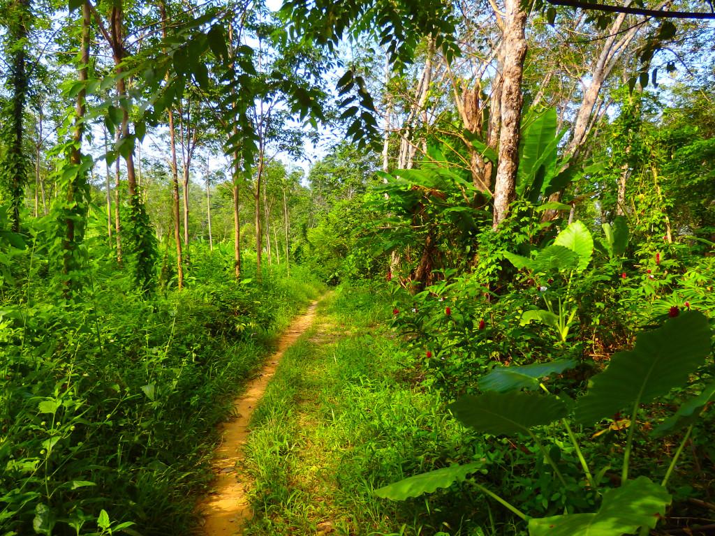 Dschungel Koh Muk